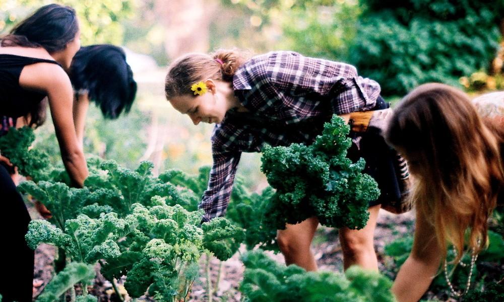Local Food Movement, farming