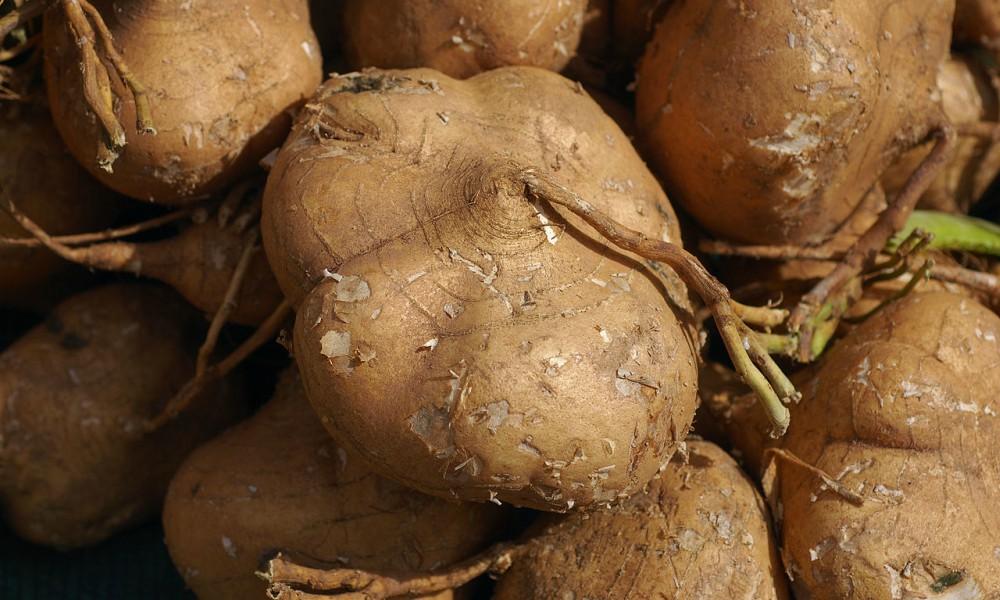 Jicama Vegetable